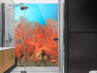 Tropical fish coral reef sea ocean underwater