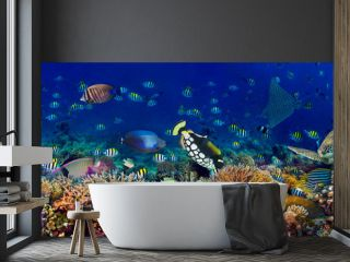 underwater coral reef landscape wide 3to1 panorama background  in the deep blue ocean with colorful fish sea turtle marine wild life