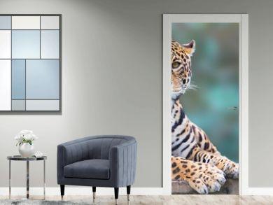 leopard looking at camera portrait