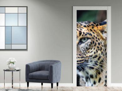 Sri Lanka, Ceylon Leopard, Panthera pardus kotiya on tree. Leopard is listed as Endangered on the IUCN Red List. Wild cat