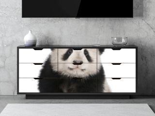 Giant Panda (6 months)