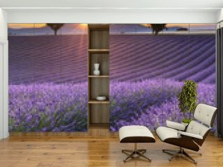 Vertical panorama of a lavender field at sunset