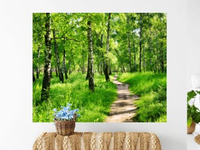 Birch forest on a sunny day. Green woods in summer