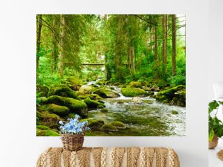 Flowing stream on the forest
