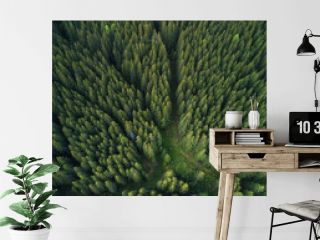Forest as a background. Natural background from air
