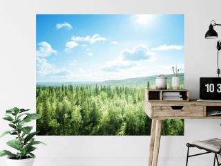forest in sunny day