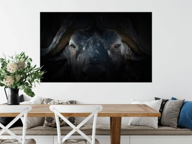 Buffalo portrait on a black background