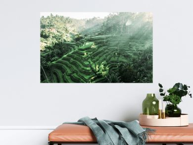 southeastasia. Aerial drone view. Landscape of the ricefields and rice terrace Tegallalang near Ubud of the island Bali in indonesia in