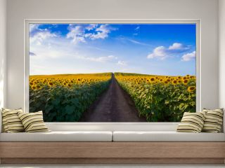 Pathway In Sunflower field