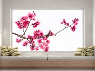 pink cherry blossom isolated on white