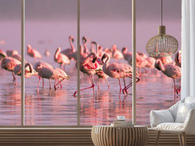 group of flamingos standing in the water in the pink sunset light on Lake Nayvasha