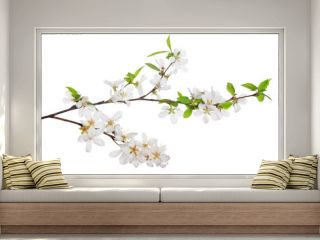 cherry tree blossoming branches with bright green leaves