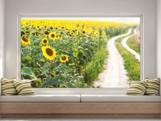 Field with sunflowers