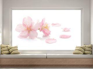 Japanese cherry blossom and petals  2