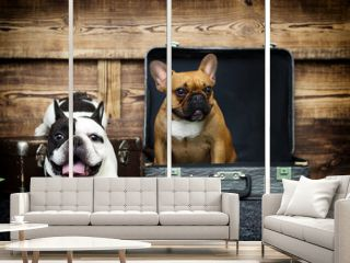 dog breed french bulldog together