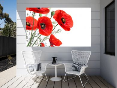 Poppy flowers isolated on a white background