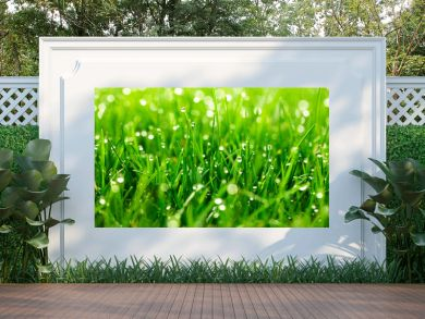 green grass with water drops close-up in sunlight background