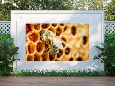 Close up of bees in a beehive on honeycomb