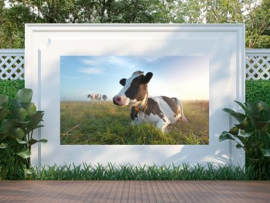 cow on pasture at sunrise