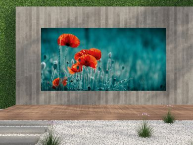 Amazing poppy field . Summer flowers .