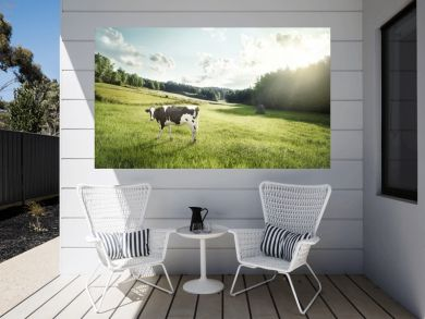 Cattle farming - cow ecological pasture on a meadow