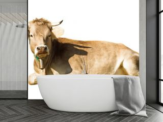 Laying cow