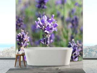 Lavender field on Cape Cod banner-Proportionate to Large Mobile Banner