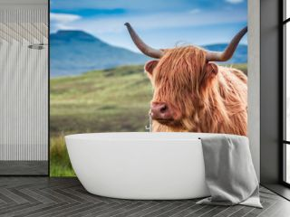 Furry highland cow in Isle of Skye, Scotland
