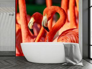 Flamboyance of Flamingos
