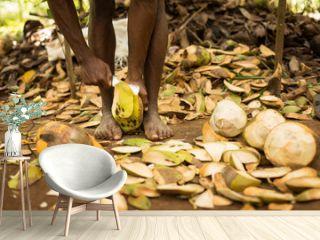 Black man cuting coconut in traditional way during spice tour in Zanzibar, Tanzania