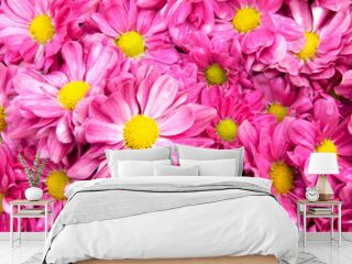 Pink flower beautiful blooming background