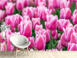 Beautiful field of pink or Magenta tulips close up. Spring background with tender tulips. Purple floral background