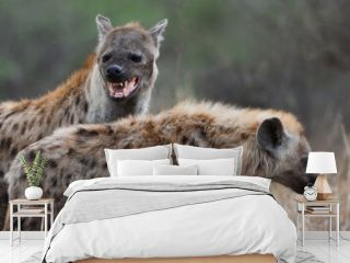 A mother spotted hyena and its young, Kruger National Park, South Africa