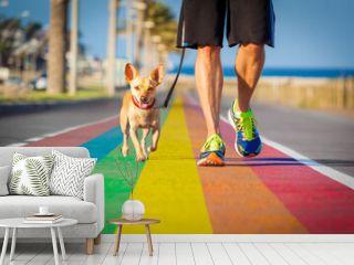 gay pride dog rainbow street with owner walking