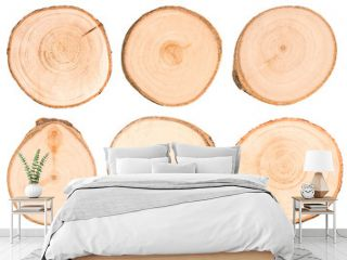 Set of cut tree trunks isolated on white background