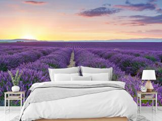 Beautiful blooming purple lavender fields near Valensole in Provence, France. Typical traditonal provencal landscape on sunset with blossoming flowers. Warm light