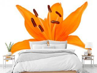 Fleur de lys orange