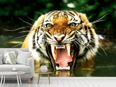 tiger of bengal
