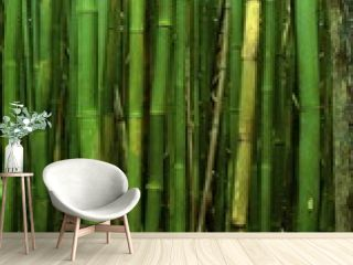 bamboo forest floor