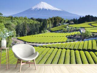 green tea fields iv