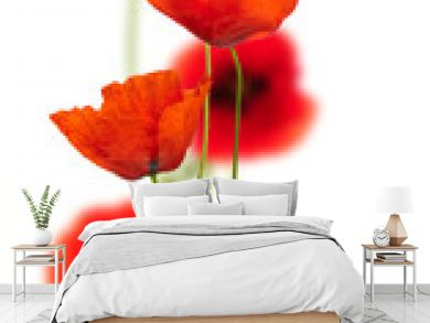 poppies on white - red poppy, floral design