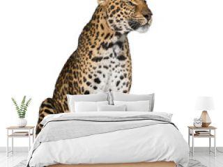 Leopard sitting against white background, studio shot