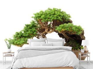 Bonsai Nadelbaum - Freigestellt