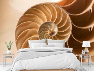 close up nautilus shell pattern