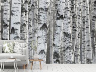 Winter Birch Tree Forest Background