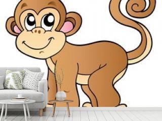 Cute small monkey