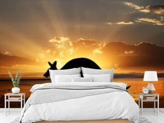 kangaroo on the sunset