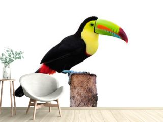 Keel Billed Toucan, from Central America. Isolated on White.