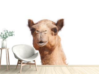 isolated camel head