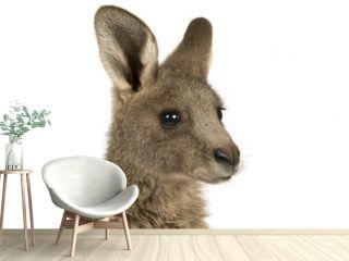 Eastern Grey joey kangaroo on a white background.